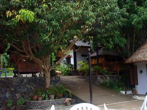 リゾートのマンゴーの木